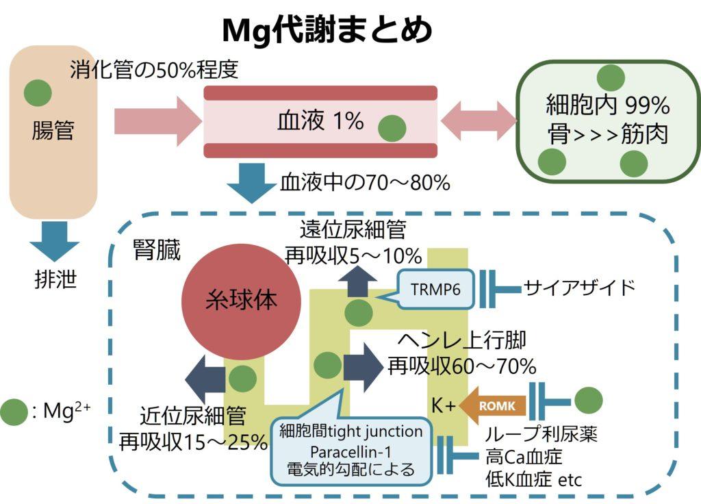 マグネシウム 禁忌 酸化