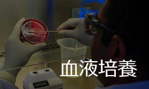 血液培養 blood culture