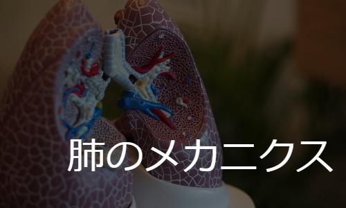 肺のメカニクス