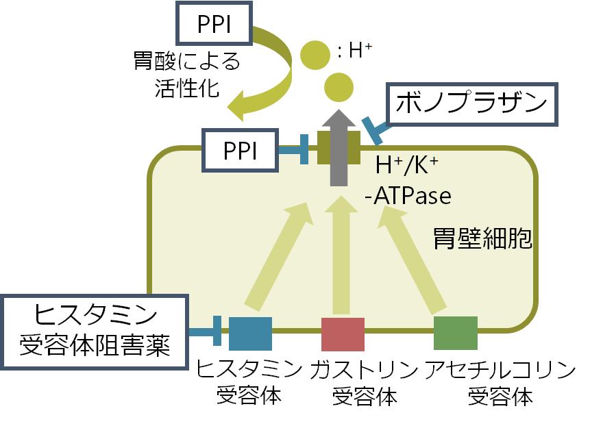 PPI プロトンポンプ阻害薬