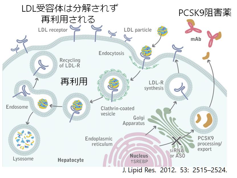 PCSK9阻害薬