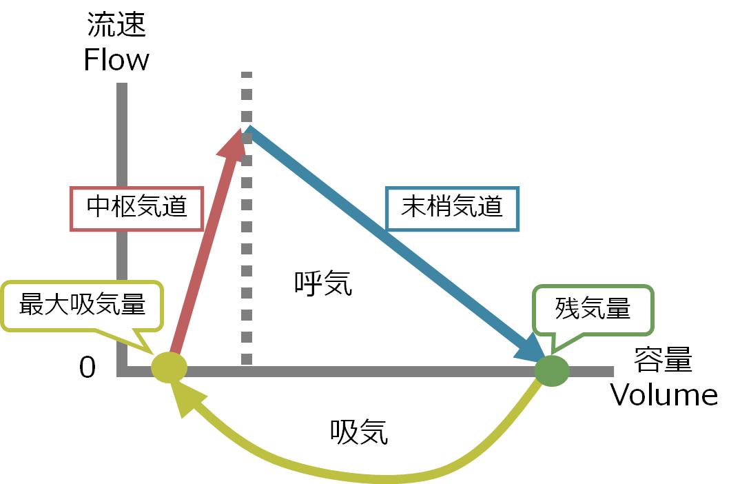 呼吸機能検査 フロー・ボリューム曲線