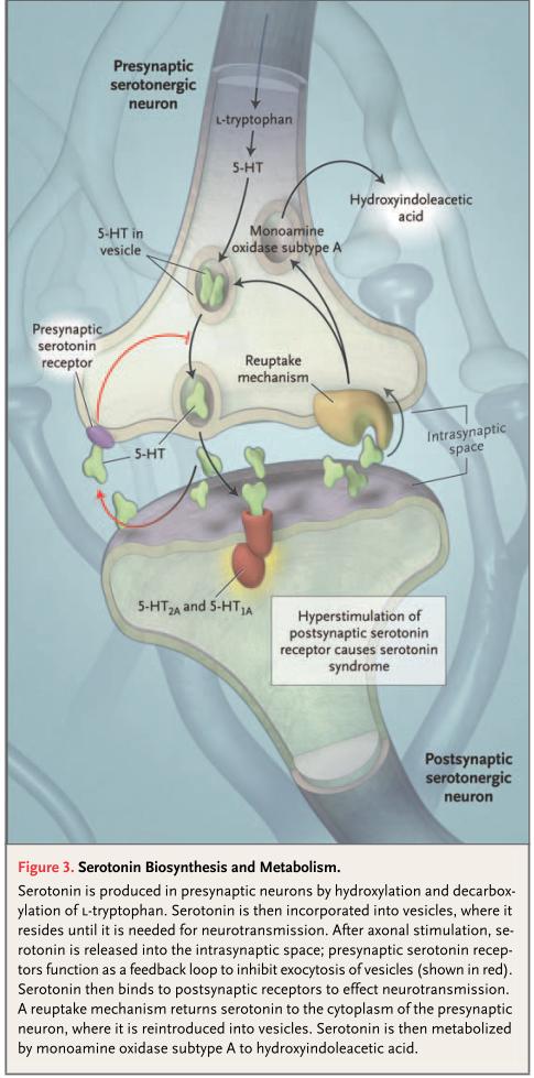 SSRI/SNRI 選択的セロトニン再取り込み阻害薬