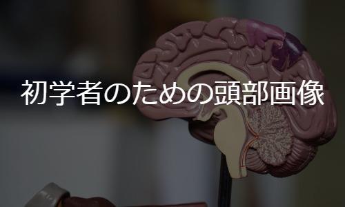 初学者のための頭部画像