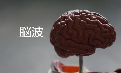 脳波の基本 EEG: Electroencephalogram